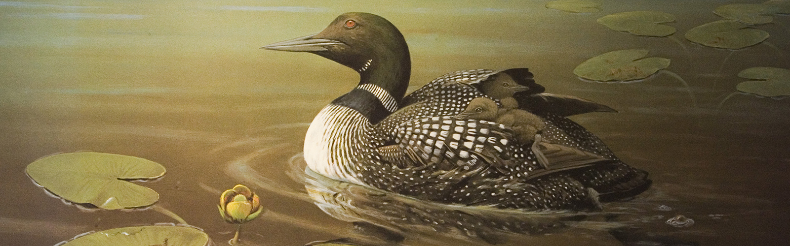 Loon with Young by Owen Gromme.