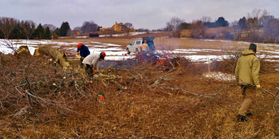 volunteers cutting down and burning hedgrerows along snow-covered fields
