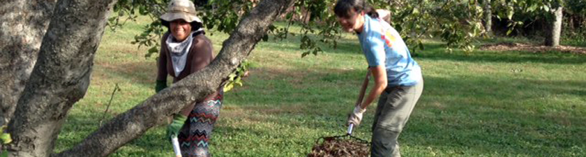 Two sojourners working in the apple orchard.