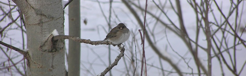 junco at Holy Wisdom Monastery