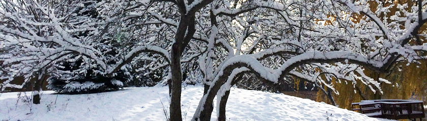 brightly lit, snow-covered tree branches casting shadows on the snow