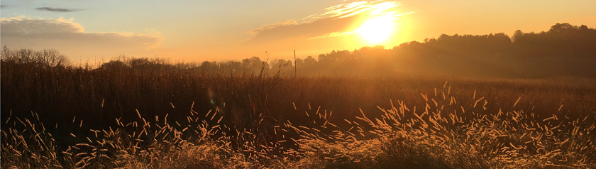 Sunrise over the prairie grasses at the monastery